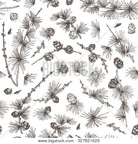 Seamless Pattern Ink Hand Drawn Sketch Illustration Of Larch Branches, Cones Isolated On White Backg