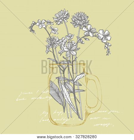 Branch Of Wild Plant Forget-me-not And Clover. Vintage Engraved Illustration. Bouquet Of Hand Drawn