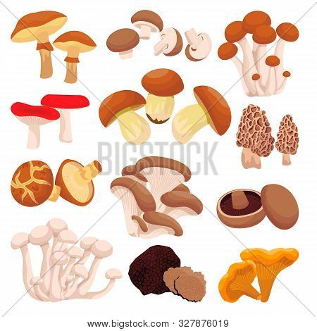 Mushrooms Collection, Isolated On White Background. Vector Flat Cartoon Illustration. Food Ingredien