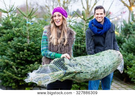 Couple carrying the Christmas tree they just bought