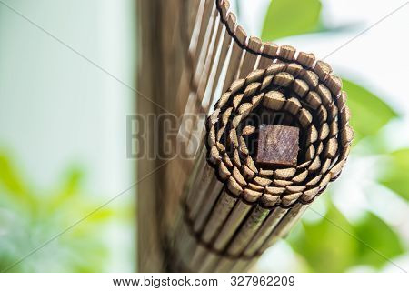 Green Plant With Traditional Style Bamboo Curtain
