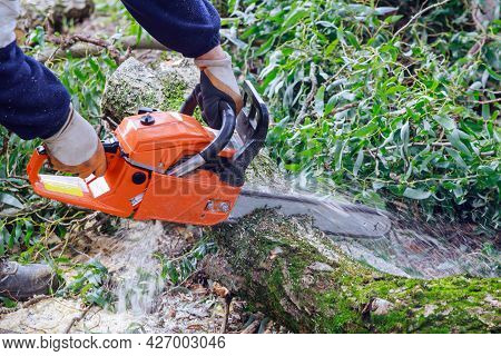 Broken The Trunk Tree After Hurricane With Worker Cutting In The With Chainsaw