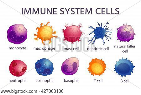 Immune System Cell Types. Cartoon Macrophage, Dendritic, Monocyte, Mast, B And T Cells. Adaptive And