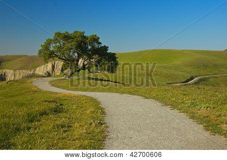 Single tree stands near a winding dirt path