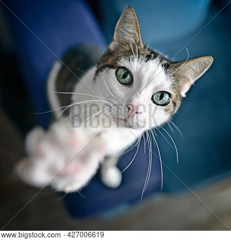 Cute Tabby Cat Looking Curious Up To The Camera. High Angle View With Selective Focus.