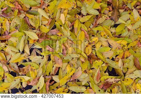 Yellow Fallen Autumn Leaves On Surface. Top View.