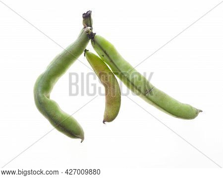 A Close-up Of Some Home-grown Broad Bean Pods Against A White Background