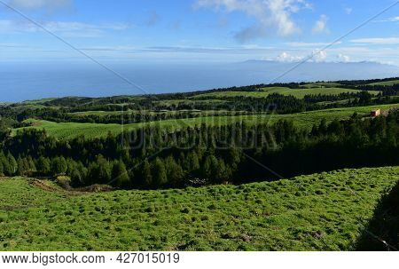 Gorgeous Landscape With Grasslands And Evergreen Trees.