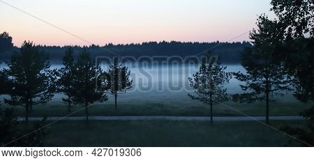 Silhouettes Of Trees Against The Background Of The Evening Summer Fog.a Mysterious Summer Evening