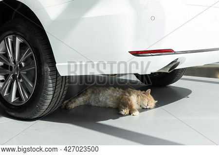 Young Man Stroking A Cat. A Cat Lying In A New Car Shade.
