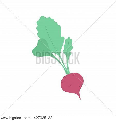 Fresh Radish Isolated On A White Background. Vegetable Ingredient For Food.