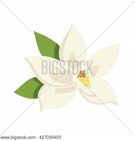 Flat Style Vanilla Flower Illustration For Food And Aroma Logo, Emblem, Label, Recipe, Menu, Print,