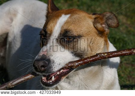 Dog And Puppy Action, Laying And Standing. A Pet And Mammal, Animal. Short And Long Hair Dogs. Natur
