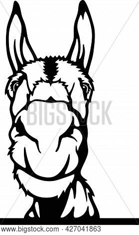 Peeking Donkey - Funny Farm Animals Peeking Out - Face Head Isolated On White