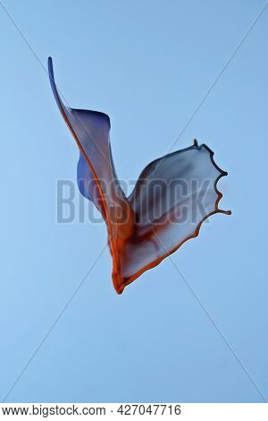 A Butterfly Shape In Orange And Blue Water Drops Shot From Above And Below To Form A Collision, Blue