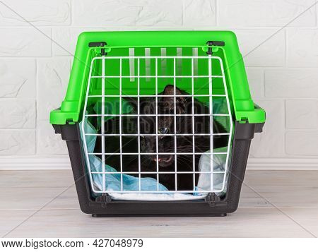 Pet Carrier With Cat Closed Inside On A White Wooden Floor. The Black Domestic Cat Is Still Under An