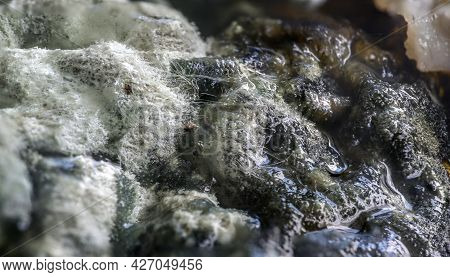 Carpet Of White And Black Mold Fungi Covering Spoiled Cream, Food Concept, Abstract Background Textu