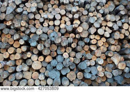 Forestry Industry Stacked Logs Raw Woodpile Natural Resources Background