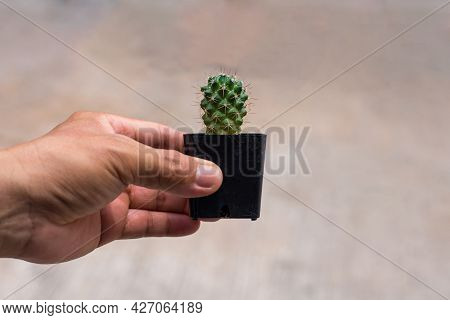 Man's Hand Holds A Tiny Cactus In A Small Pot Against A Brown Background, A Succulent Plant With Thi