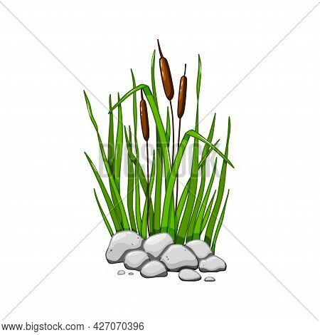 Reeds In Grass In The Stones Isolated On White Background. Vector Illustration In Cartoon Style.