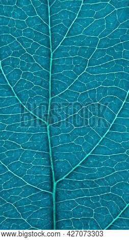 Leaf Of Fruit Tree Close-up. Turquoise Tinted Mosaic Pattern Of Veins And Plant Cells. Blue Green Mo