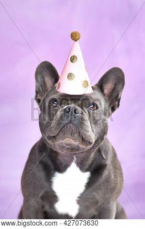 Black French Bulldog Dog Wearing Birthday Party Hat On Violet Background