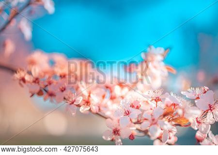 Beautiful Spring Nature Scene With Pink Blooming Tree, Blurred Dream Bokeh View. Closeup Of Spring P