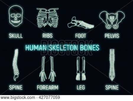 Human Skeleton Bone Icon Glow Neon Style, Leg Forearm Skull, Ribs Part Organism Roentgen Human Body
