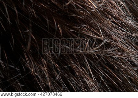Close Up Of Messy Brunette Hair. Clean Wavy Shiny Hairstyle