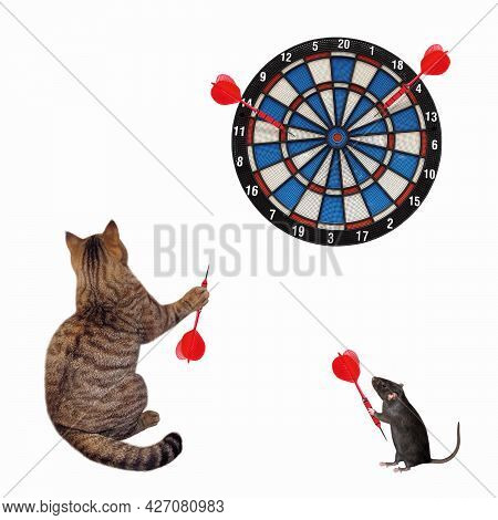 A Beige Cat With A Rat Are Playing Darts Together. White Background. Isolated.