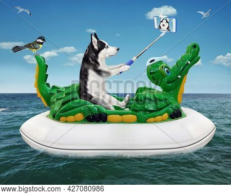 A Dog Husky With A Smartphone Is Taking Selfie And Floating On An Inflatable Crocodile In The Sea At