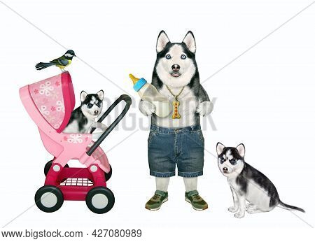 A Dog Husky With A Bottle Of Milk Is Near A Pink Stroller With Its Puppy. White Background. Isolated