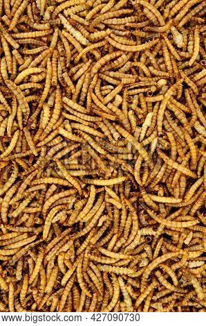 Dried Mealworm Larvae Background Used For Pets And Wild Bird Food