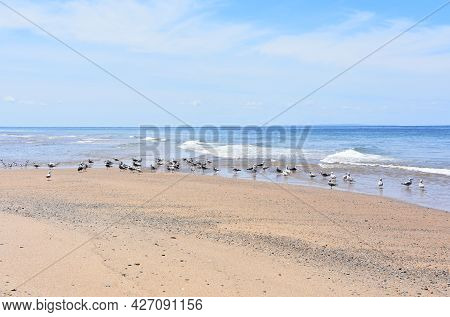 Coastal Birds Along The Edge Of The Waters On Cape Cod.