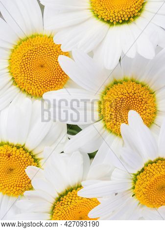 White Daisies With Yellow Centers, Bouquet, Natural Floral Background