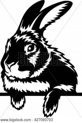 Peeking Rabbit - Funny Farm Animals Peeking Out - Face Head Isolated On White