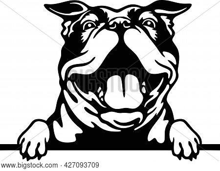 Peeking Bulldog - Funny Farm Animals Peeking Out - Face Head Isolated On White