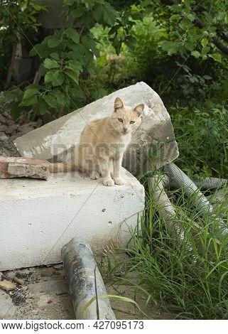Little Ginger Kitten Sitting And Watch On A Camera On A Obsolete Bricks Outdoor Kitten