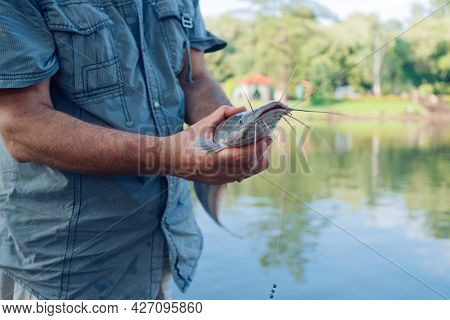 A Man Holds In His Hands A Caught Catfish With A Hook In His Mouth In A Pond, On In The Park
