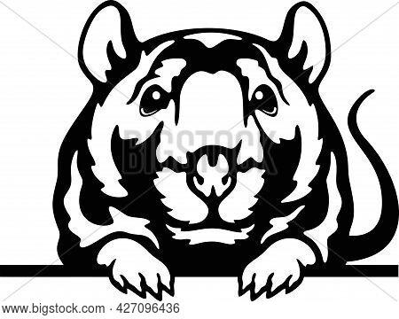 Peeking Mouse - Funny Farm Animals Peeking Out - Face Head Isolated On White