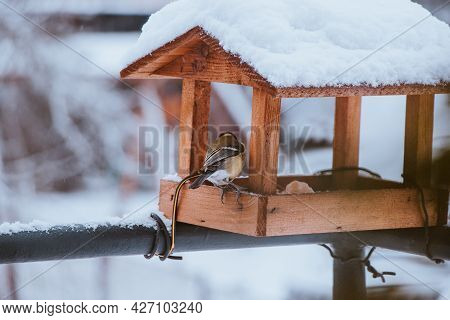 Group Of Colorful Great Tit Enjoy Seeds, Goodies In A Wooden Feeder In Winter. A Common Czech Bird,