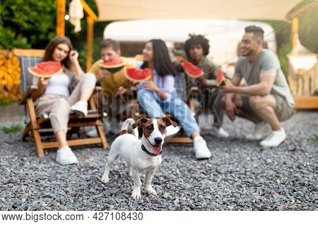 Young Multiethnic People Relaxing In Lounge Chair With Watermelon Near Rv, Selective Focus On Pet Do