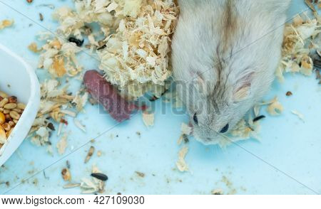 Hamster Mother And Her New Born Baby