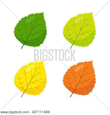 Multicolored Poplar, Betula Or Aspen Leaves Icons Isolated On White Background. Green, Yellow And Br