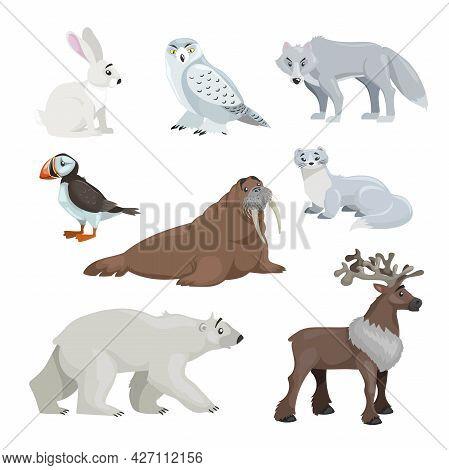 Cartoon Polar And Arctic Animals. Snowy Hear, Owl, Wolf, Puffin, Walrus, Ermine, Polar Bear And Rein