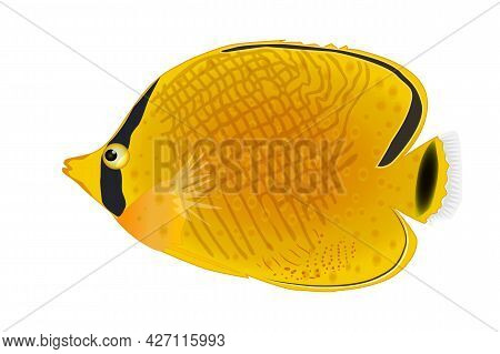 Masked Butterfly Fish Isolated On White Background. Tropical Underwater Aquatic Creatures. Chaetodon