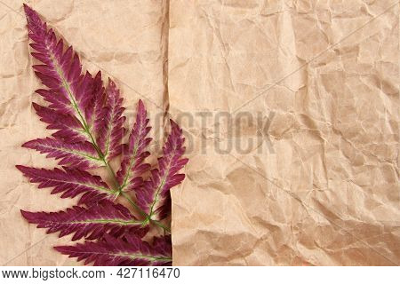 A Minimalistic Fern Branch Of A Beautiful Yellow-red Color, Lying On A Background Of Craft Paper.aut