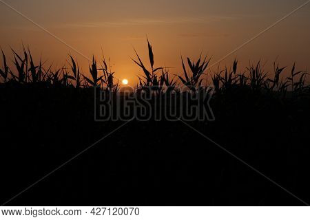 Colourful Sunset With Reeds In The Foreground