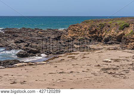 San Simeon, Ca, Usa - June 8, 2021: Pacific Ocean Coastline North Of Town. Few Elephant Seals Sleepi