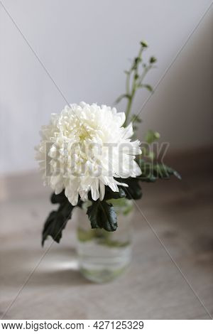 Large White Chrysanthemum In A Transparent Glass Vase, Which Stands On A Table. Copy Space